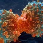 seguros oncologicos